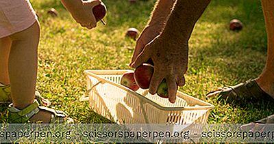 3 Meilleurs Spots De Cueillette De Pommes Dans Le Maryland