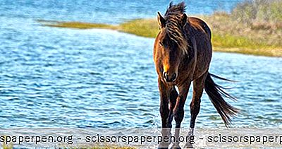 Parhaat Marylandinsaaret: Assateague Island