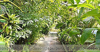 Aktivitäten In Baltimore: Howard P. Rawlings Konservatorium Und Botanischer Garten