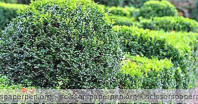 Yang Harus Dilakukan Di Maryland: Ladew Topiary Gardens