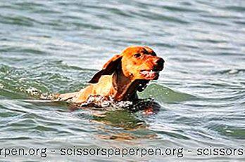 25 Cele Mai Bune Plaje Prietenoase Pentru Câini Din Massachusetts