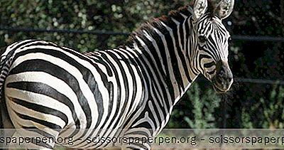 Unternehmungen In Boston, Ma: Franklin Park Zoo