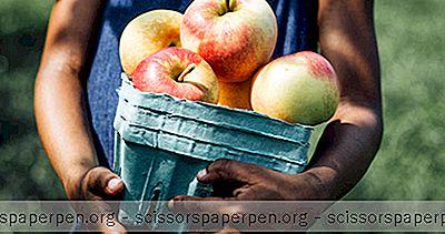 3 Καλύτερα Σημεία Συλλογής Μήλων Στο Μίτσιγκαν