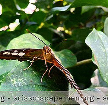 Maison Des Papillons Et Monde Des Insectes Sur L'Île De Mackinac