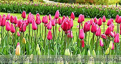 Tehtävät Hollannissa: Veldheer Tulip Garden