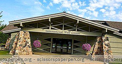 Dinge, Die Man In Minnesota Unternehmen Kann: Das Internationale Wolfszentrum