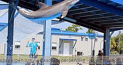 Ting At Gøre I Gulfport: Institut For Undersøgelser Af Havpattedyr