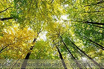 สิ่งที่ต้องทำเซนต์หลุยส์: สวนป่า