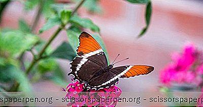 Aktivitäten In Branson, Missouri: Der Schmetterlingspalast Und Das Regenwaldabenteuer