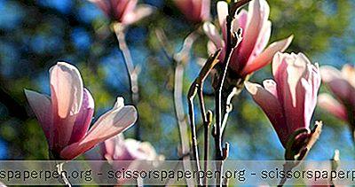 Coisas Para Fazer Em Greensboro, Nc: Greensboro Arboretum
