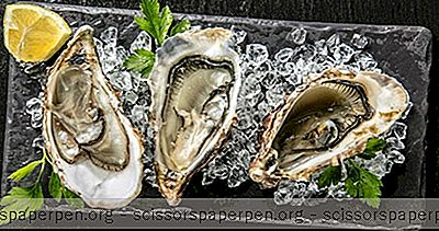 Unternehmungen In Wilmington, NC: Dock Street Oyster Bar