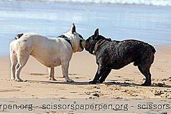 10 Плажове, Удобни За Кучета, В Ню Джърси