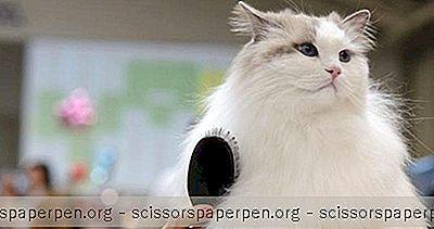 Usa - Konferencia O Mačkách V Parku Catsbury Park