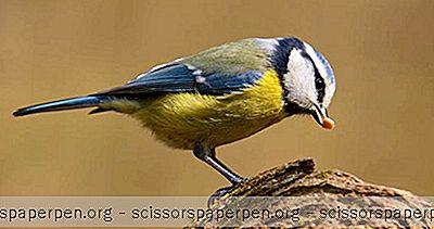 Stvari Koje Treba Učiniti U Cape May, Nj: Cape May Country Park & Zoo