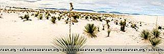 Ting Å Gjøre I New Mexico: White Sands National Monument