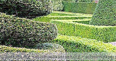 Beste Dinge, Die Man In South Carolina Unternehmen Kann: Pearl Fryar Topiary Garden