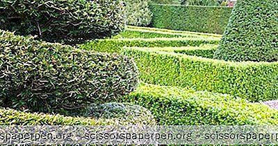 Meilleures Choses À Faire En Caroline Du Sud: Jardin De Topiaire Pearl Fryar