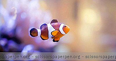 Concord Zu Erledigen: Sea Life Charlotte-Concord