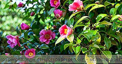 要做的事在北卡罗来纳州费耶特维尔:Cape Fear植物园