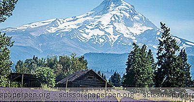 Mount Hood Pacēlums