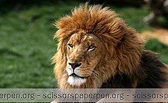 Yang Dapat Dilakukan Di Philadelphia, Pa: Kebun Binatang Philadelphia