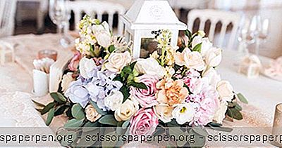 Tiger Lily Weddings - Floral Design In Charleston