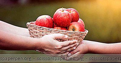 Meilleurs Endroits Pour Cueillir Des Pommes Au Texas