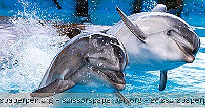Maailman Parhaat Akvaariot: Ushaka Marine World