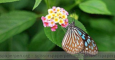 Най-Добрите Неща За Правене В Коста Рика: Консерватория За Пеперуди