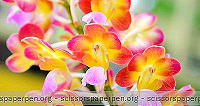 Costa Rica Dinge Zu Tun: Monteverde Orchid Garden