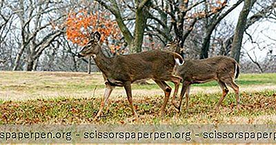 Choses À Faire Dans Le Nebraska: Lee G. Simmons Conservation Park Et Wildlife Safari
