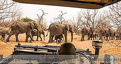 Afrikanische Safari Kosten