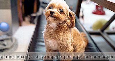 Travel Ábendingar - Dog Buddy Dogsitting Pallur