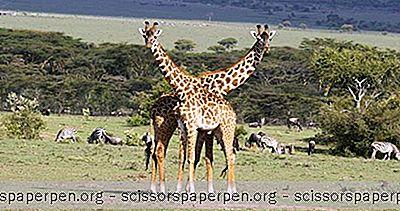 สัตว์ซาฟารีที่มีชื่อเสียงและสถานที่ที่จะพบพวกเขา
