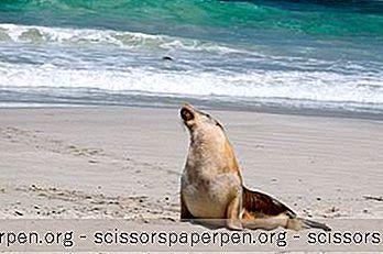 9 Beste Dingen Om Te Doen Op Kangaroo Island, Australië