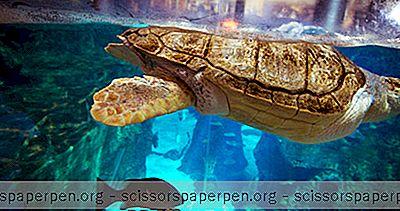 Prázdniny - Najlepšie Akvária Na Svete: Turkuazoo Sea Life Aquarium