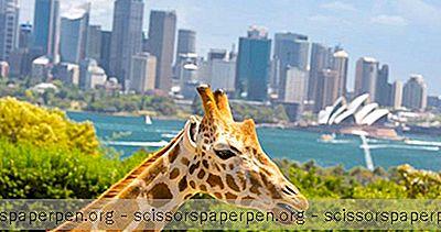 Sydney, Australien Sehenswürdigkeiten: Taronga Zoo