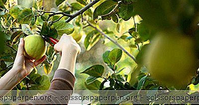 Beste Apfelpflückstellen In Vermont