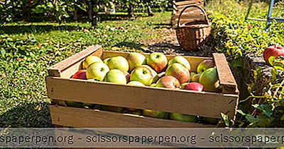 4 Beste Apple Picking Spots In Virginia