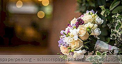 Места За Сватби В Роли: Сграда В Борден И Амфитеатър На Фред Флетчър