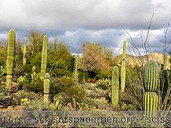 25 Najbolje Stvari U Tucsonu, Az