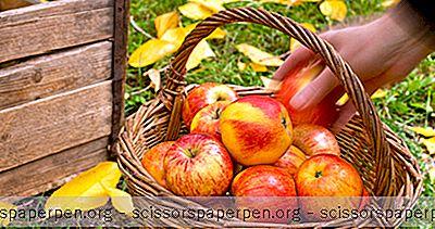 3 Nejlepší Apple Sbíráme Skvrny Ve Wisconsinu