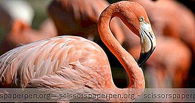 Choses À Faire À Milwaukee, Wi: Le Zoo Du Comté De Milwaukee